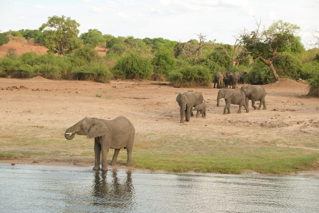 Croisière sur le Chobé, Botswana